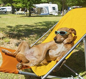 Pet friendly rv camping - Dog enjoying KQ Ranch RV Resort